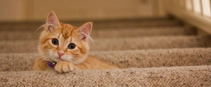 Miezwohnung - Katze mit Halsband auf Treppe