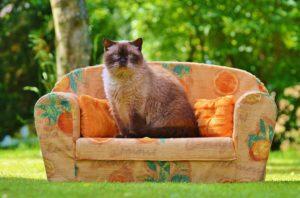 Katze sitzt auf Katzensofa